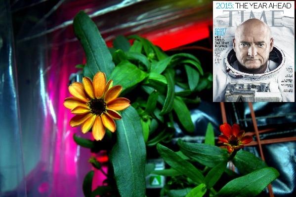 uzayda açan çiçek-