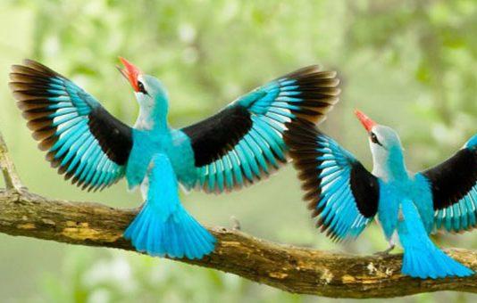 Kuş Fotoğrafçılığı için 10 Tavsiye